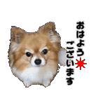 愛犬マロンの肉球【写真】(個別スタンプ:2)