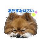 愛犬マロンの肉球【写真】(個別スタンプ:3)