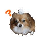 愛犬マロンの肉球【写真】(個別スタンプ:4)