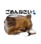 愛犬マロンの肉球【写真】(個別スタンプ:5)