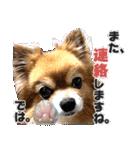 愛犬マロンの肉球【写真】(個別スタンプ:6)