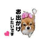 愛犬マロンの肉球【写真】(個別スタンプ:7)