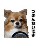 愛犬マロンの肉球【写真】(個別スタンプ:8)