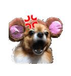 愛犬マロンの肉球【写真】(個別スタンプ:9)