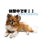愛犬マロンの肉球【写真】(個別スタンプ:10)