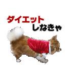 愛犬マロンの肉球【写真】(個別スタンプ:11)