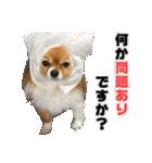 愛犬マロンの肉球【写真】(個別スタンプ:12)