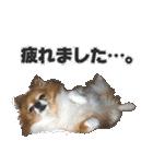 愛犬マロンの肉球【写真】(個別スタンプ:13)