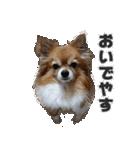愛犬マロンの肉球【写真】(個別スタンプ:14)