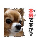 愛犬マロンの肉球【写真】(個別スタンプ:15)