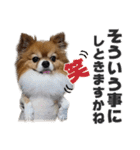 愛犬マロンの肉球【写真】(個別スタンプ:17)