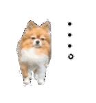 愛犬マロンの肉球【写真】(個別スタンプ:18)