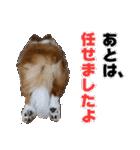愛犬マロンの肉球【写真】(個別スタンプ:19)