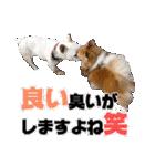 愛犬マロンの肉球【写真】(個別スタンプ:20)