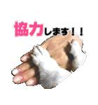 愛犬マロンの肉球【写真】(個別スタンプ:21)