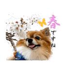 愛犬マロンの肉球【写真】(個別スタンプ:23)