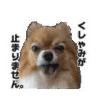 愛犬マロンの肉球【写真】(個別スタンプ:24)