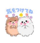 ポメラニアンぽちゃん☆やさしい言葉(個別スタンプ:13)