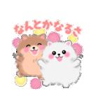 ポメラニアンぽちゃん☆やさしい言葉(個別スタンプ:15)