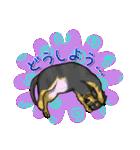 可愛い子犬のダックスたち(個別スタンプ:15)