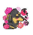 可愛い子犬のダックスたち(個別スタンプ:20)