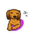 可愛い子犬のダックスたち(個別スタンプ:28)