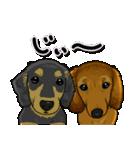 可愛い子犬のダックスたち(個別スタンプ:32)