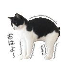 うちのむぅちゃん【実写版】2(個別スタンプ:01)