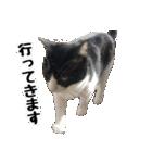 うちのむぅちゃん【実写版】2(個別スタンプ:04)