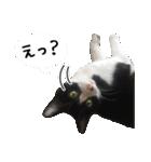 うちのむぅちゃん【実写版】2(個別スタンプ:07)