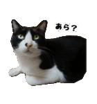 うちのむぅちゃん【実写版】2(個別スタンプ:15)