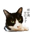 うちのむぅちゃん【実写版】2(個別スタンプ:24)