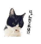 うちのむぅちゃん【実写版】2(個別スタンプ:26)