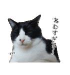 うちのむぅちゃん【実写版】2(個別スタンプ:31)