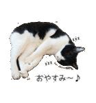 うちのむぅちゃん【実写版】2(個別スタンプ:32)
