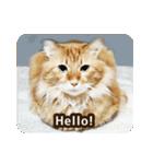 猫のちゃぶちゃん(個別スタンプ:01)