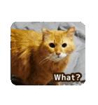 猫のちゃぶちゃん(個別スタンプ:05)