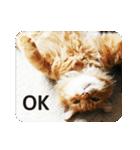 猫のちゃぶちゃん(個別スタンプ:07)