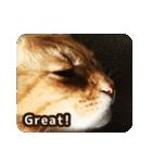 猫のちゃぶちゃん(個別スタンプ:12)