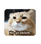 猫のちゃぶちゃん(個別スタンプ:15)