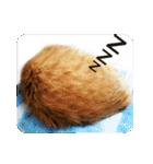 猫のちゃぶちゃん(個別スタンプ:17)