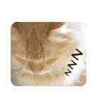 猫のちゃぶちゃん(個別スタンプ:18)