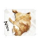 猫のちゃぶちゃん(個別スタンプ:19)