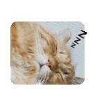 猫のちゃぶちゃん(個別スタンプ:20)