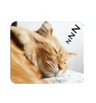 猫のちゃぶちゃん(個別スタンプ:21)