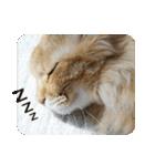 猫のちゃぶちゃん(個別スタンプ:22)