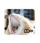 猫のちゃぶちゃん(個別スタンプ:23)
