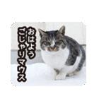 悪気のない野良猫たち(個別スタンプ:01)