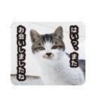 悪気のない野良猫たち(個別スタンプ:02)