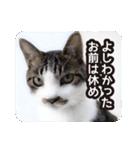 悪気のない野良猫たち(個別スタンプ:3)
